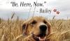 Film Review: A Dog'sPurpose