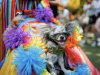 LGBT+ stars to parade rainbow-dressed pooches in Pride dog show